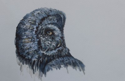 Great Gray Owl--Drawing  8 x 8
